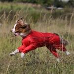 Комбинезон для собак на грязь р35-1 (сука)