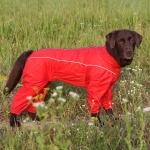 Комбинезон для собак на грязь р55-2 (сука)