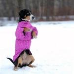 Жилет для собак утепленный р.40