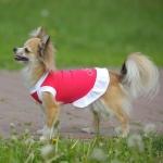 Платье для собак «Красотка» р.25