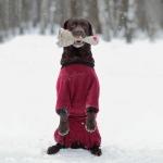Комбинезон для собак из флиса р.37 (сука)